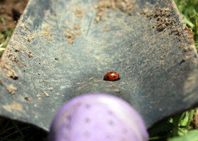 A ladybird crawling on a small spade laying on the grass photo for the Richard W Luscombe Photography Portfolio