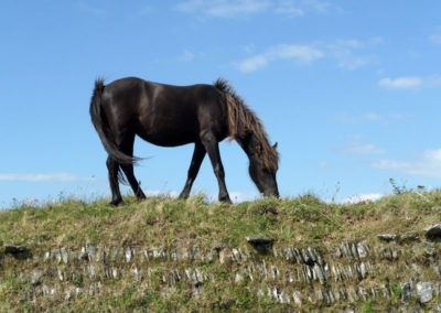 A horse grazing at Rame Head photo for the Richard W Luscombe Photography Portfolio