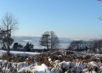 Snowy Devon