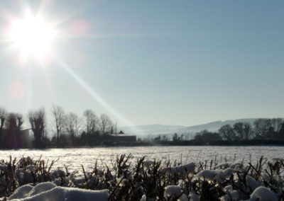 Snowy Devon Field