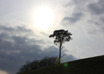 Tree on a Hill at Mount Edgcumbe