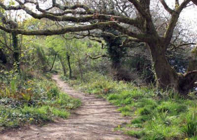 Woodland Path at Antony Cornwall photo for the Richard W Luscombe Photography Portfolio